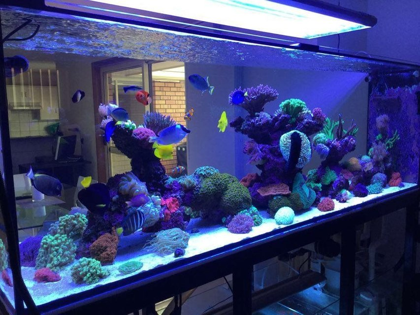 Rated #2: 400 Gallons Reef Tank - 400g mixed reef
