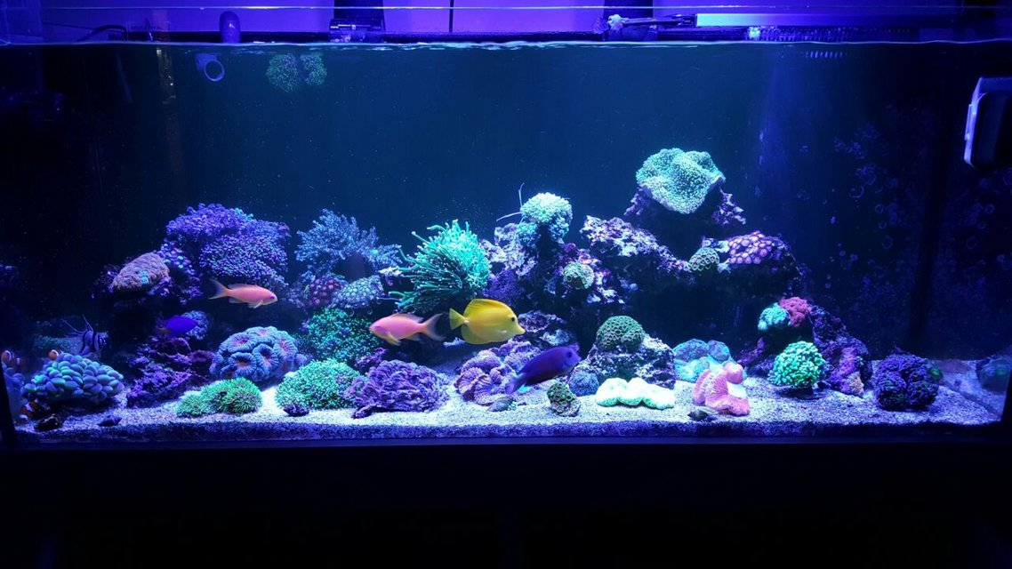 Rated #5: 90 Gallons Reef Tank - .