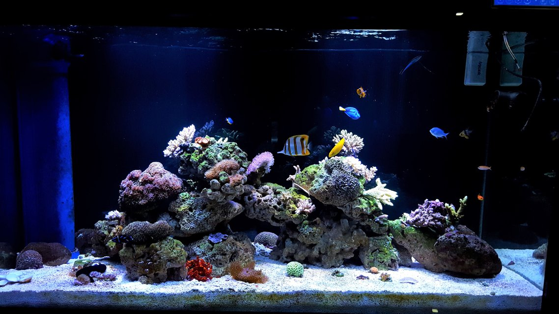 Rated #7: 150 Gallons Reef Tank - My Tank 150G