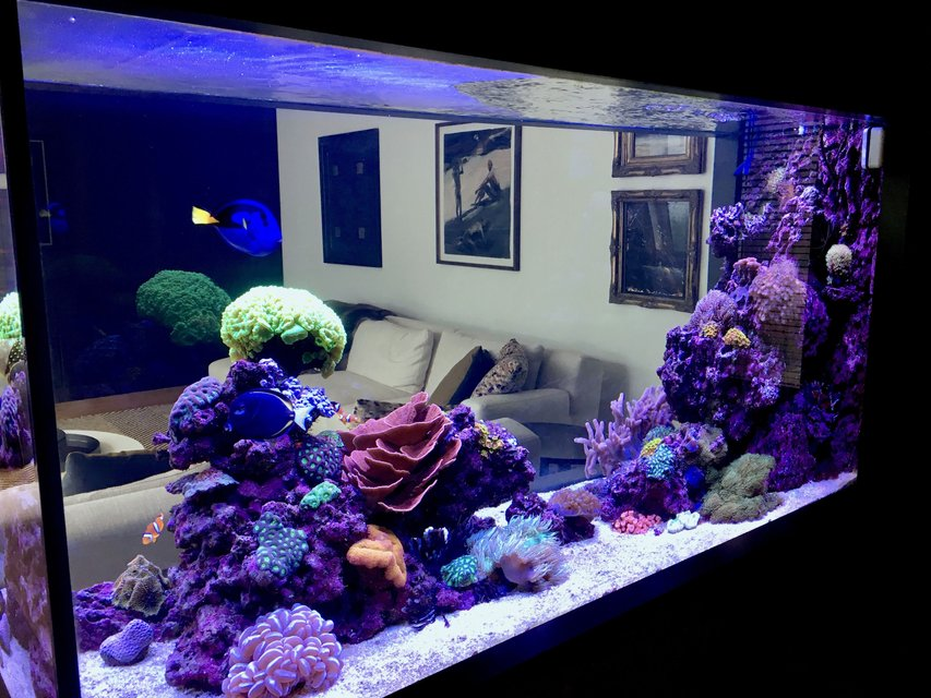 Rated #3: 90 Gallons Reef Tank - Reef it