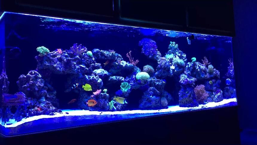 Rated #2: 139 Gallons Reef Tank - MY 140 GALLON REEF TANK