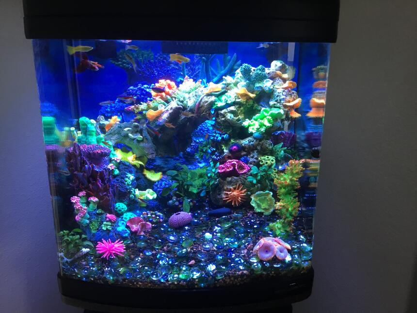 Rated #6: 28 Gallons Reef Tank - Freshwater reef.