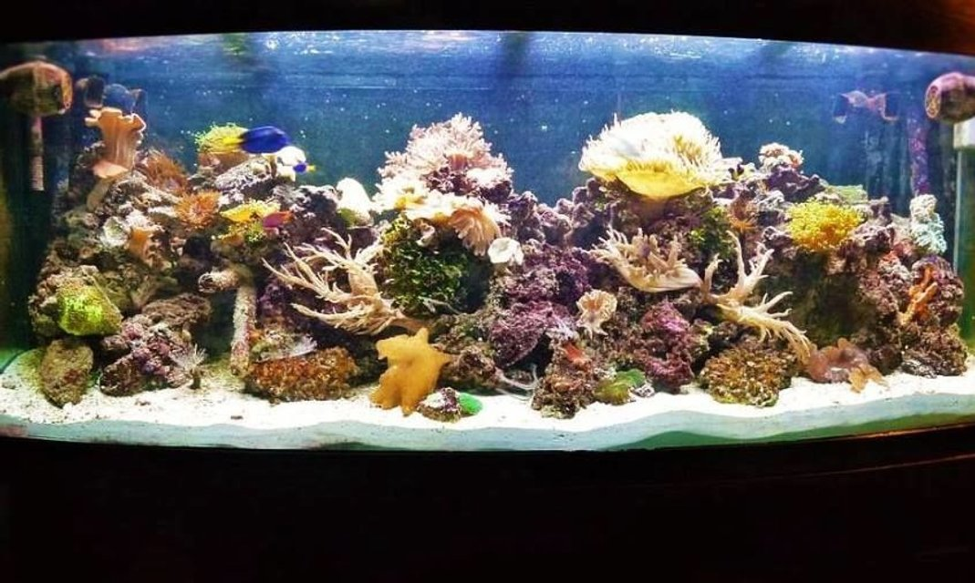 Rated #3: 120 Gallons Reef Tank - Drop of a ocean seen indoors