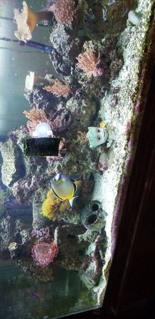 Rated #5: 75 Gallons Reef Tank - Our tank