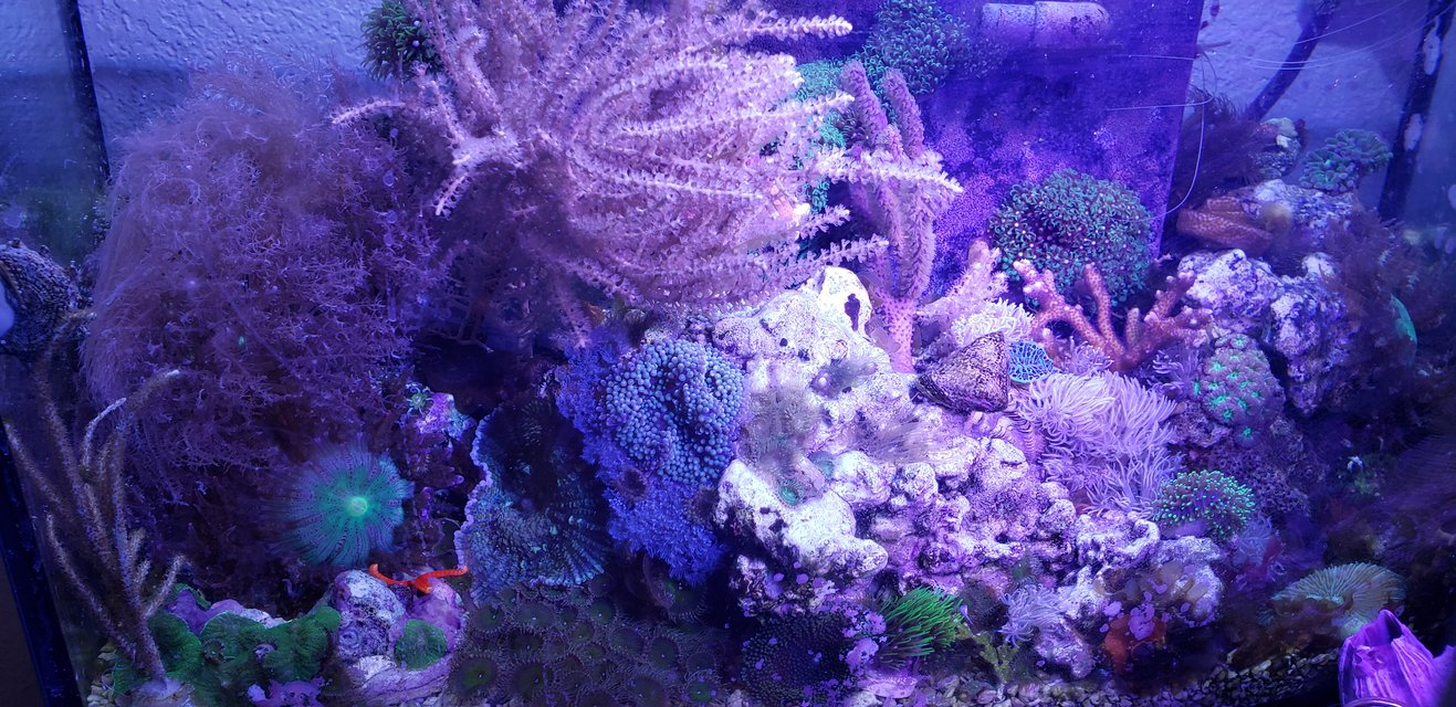 Rated #3: 8 Gallons Reef Tank - Low budget nano reef tank