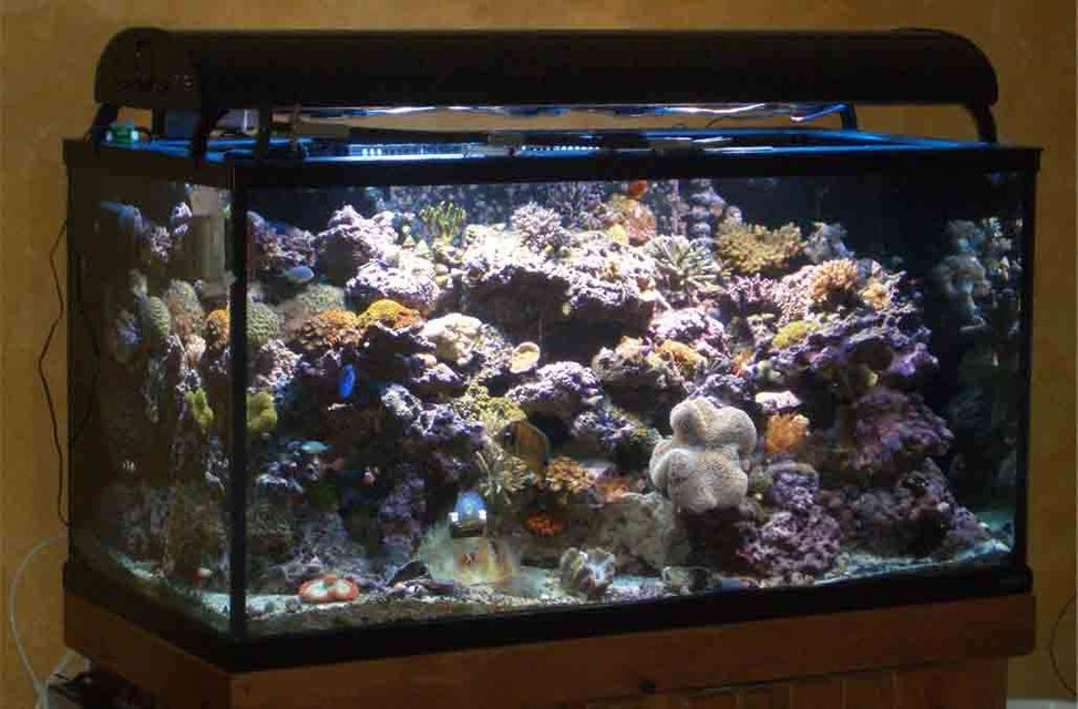 Rated #51: 160 Gallons Reef Tank - Tank as of 11/29/06