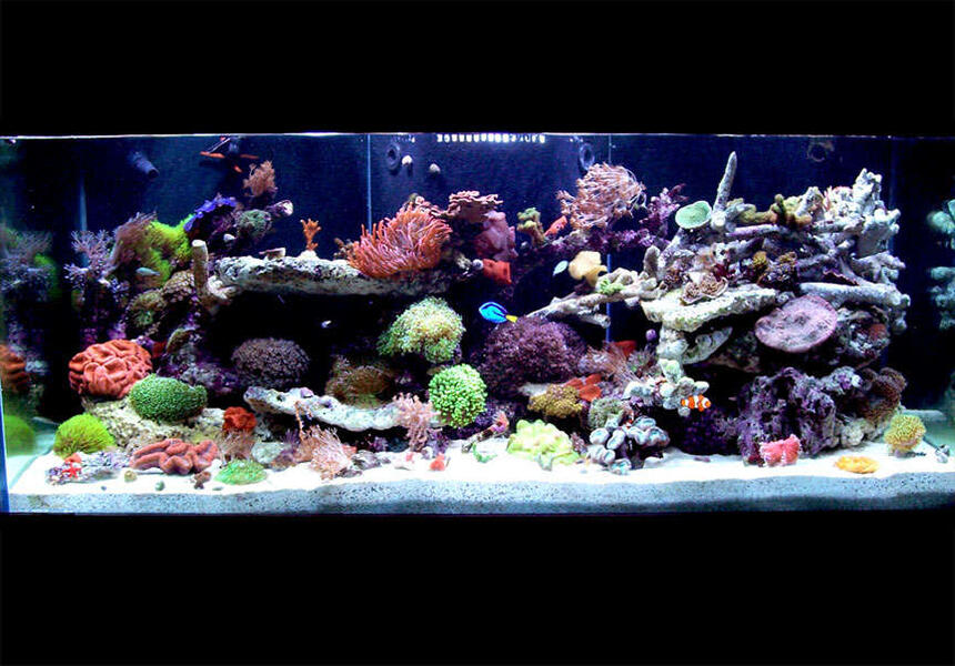 Rated #4: 150 Gallons Reef Tank - 150 Gallon - full tank shot