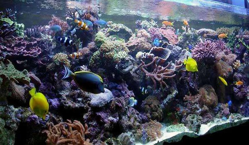 Rated #10: 240 Gallons Reef Tank - my reef tank
