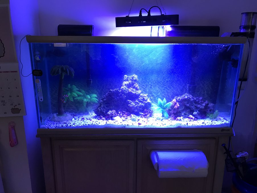 55 gallons reef tank (mostly live coral and fish) - My Tank