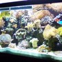 125 gallons reef tank (mostly live coral and fish) - pic1