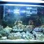 reef tank (mostly live coral and fish) - 29 gallon