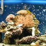 55 gallons reef tank (mostly live coral and fish)