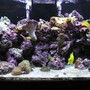 125 gallons reef tank (mostly live coral and fish) - Front