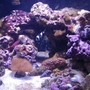 24 gallons reef tank (mostly live coral and fish) - 24g Nano cube with 150w sunpod