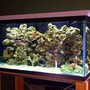 120 gallons reef tank (mostly live coral and fish) - hi