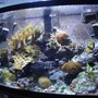 46 gallons reef tank (mostly live coral and fish) - new photos with the 7.1mpxl cam.
