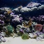 65 gallons reef tank (mostly live coral and fish) - 65g