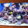 65 gallons reef tank (mostly live coral and fish)