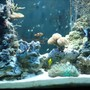 88 gallons reef tank (mostly live coral and fish) - My baby