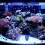 46 gallons reef tank (mostly live coral and fish) - Most recent update of my whole tank!