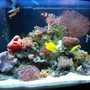 72 gallons reef tank (mostly live coral and fish) - New Stuff!!!