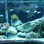 125 gallons reef tank (mostly live coral and fish) - 125 LONG