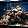 65 gallons reef tank (mostly live coral and fish) - 65 gallon tank in my office