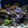 28 gallons reef tank (mostly live coral and fish) - My reef tank