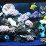 150 gallons reef tank (mostly live coral and fish) - AquaReef