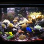 65 gallons reef tank (mostly live coral and fish) - 65 gal fish&reef