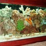 75 gallons reef tank (mostly live coral and fish) - Our tank--- hopefully ya'll like it as much as we do!