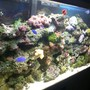 55 gallons reef tank (mostly live coral and fish) - 55 gallon tank
