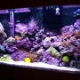 40 gallons reef tank (mostly live coral and fish) - my reef
