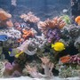 80 gallons reef tank (mostly live coral and fish) - Add new fishes