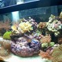 10 gallons reef tank (mostly live coral and fish) - Full Tank Shot