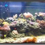120 gallons reef tank (mostly live coral and fish) - 120 Gallon Reef