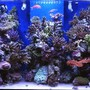 120 gallons reef tank (mostly live coral and fish) - new aquascaping tank 1 year old now