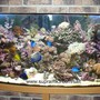125 gallons reef tank (mostly live coral and fish) - 125gallon