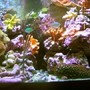 29 gallons reef tank (mostly live coral and fish) - 29 gallon Bio Cube mostly SPS tank.