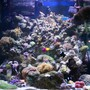 60 gallons reef tank (mostly live coral and fish) - Front 1