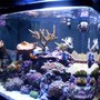 24 gallons reef tank (mostly live coral and fish) - My Reef
