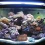 92 gallons reef tank (mostly live coral and fish) - My New Bow Front Aquarium!