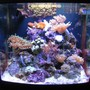 125 gallons reef tank (mostly live coral and fish) - 8g biocube