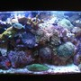 90 gallons reef tank (mostly live coral and fish) - 90 Gal Reef Tank. Photo taken 4/25/09