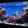 185 gallons reef tank (mostly live coral and fish) - Here is a update of the tank.