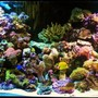150 gallons reef tank (mostly live coral and fish) - My Reef Tank