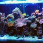 250 gallons reef tank (mostly live coral and fish) - Latest Uploade Picture