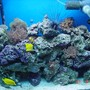 125 gallons reef tank (mostly live coral and fish) - OLD TANK 40GAL. MY FIRST GETING IT GOING AGAIN SET IT BACK UP 10/03/06 CHECK OUT MY PROFILE MORE PICS OF DIFFERENT TANKS I HAVE