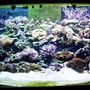 300 gallons reef tank (mostly live coral and fish)