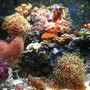 29 gallons reef tank (mostly live coral and fish) - 29 Gallon Bio Cube reef tank